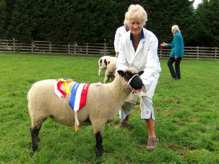 Sally Hodges, York Interbreed Champ 2013